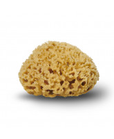 Organic honey sponge