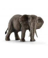 African elephant - female