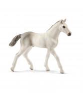 Holsteiner - foal