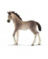 Andalusian - foal
