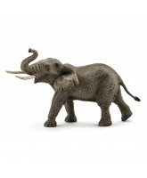 African elephant - male