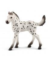 Knabstrupper - Foal