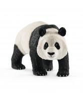 Giant panda - male