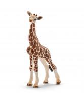 Giraffe - calf