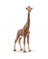 Giraffe - female
