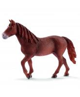 Morgan horse - mare