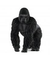 Gorilla - male