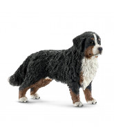 Bernese mountain dog - female
