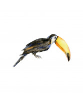 Wall sticker - Rafi the toucan