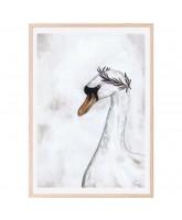 Proud swan poster 50x70 cm