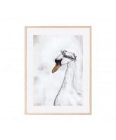Proud swan poster 30x40 cm